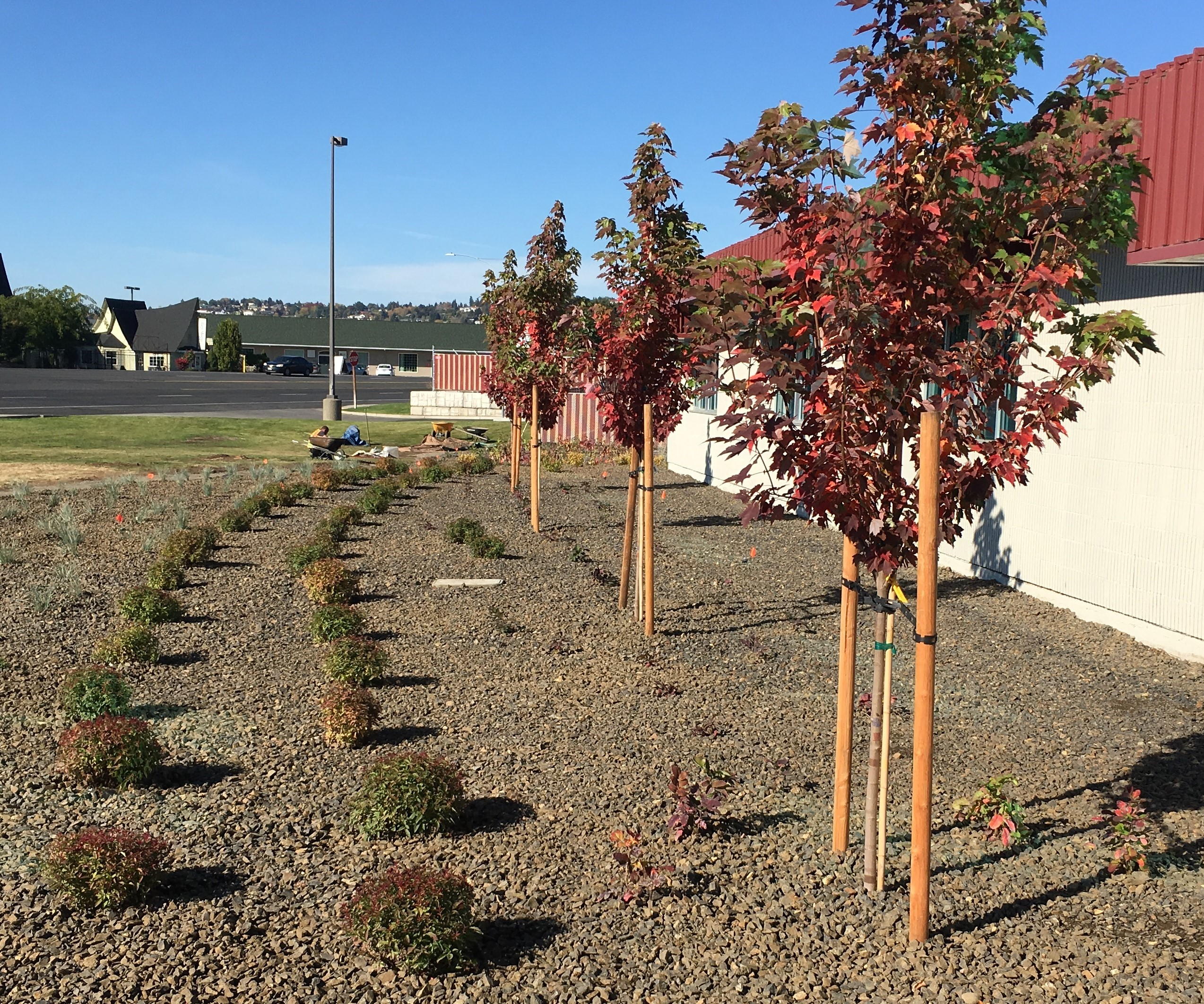 Public Works Landscaping Project to Conserve Water - News - City of ...