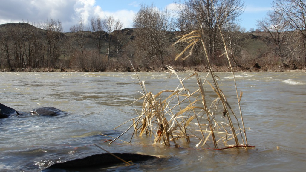 Rain and warm temperatures have raised water levels to flood stage on many rivers and streams in the area including near the City of Yakima Water plant on the Naches River.