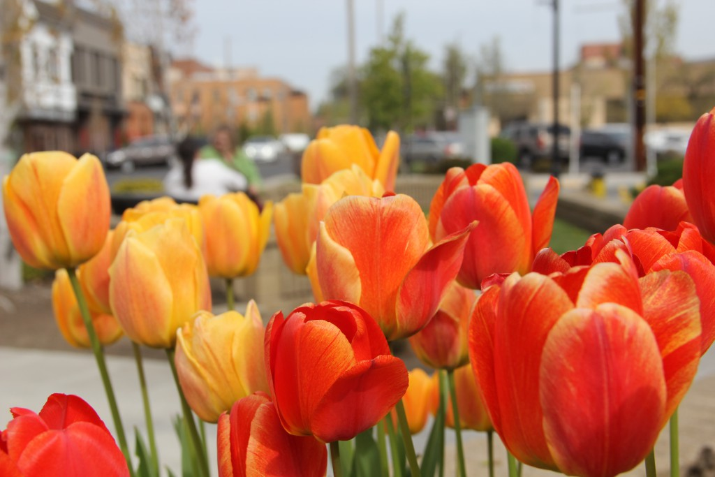 Stunning tulips and other flowers fill many planters along 2nd Street in Downtown Yakima as spring has taken over the valley.