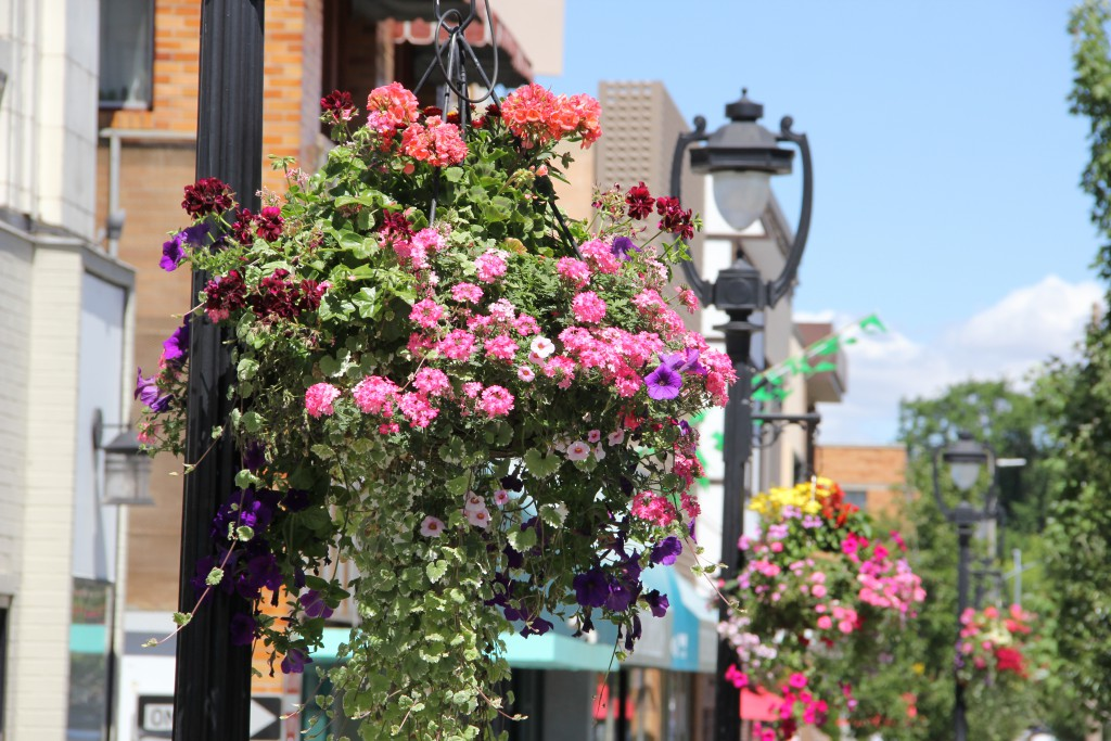 More than 300 flower baskets pop with color along many of the streets in Downtown Yakima.