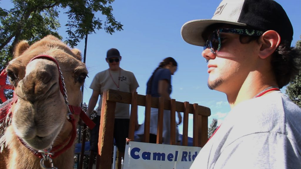 "Eastwood T. Camel is not amused by the ""Every day is hump day"" joke from his handler at the 2016 Central Washington State Fair."