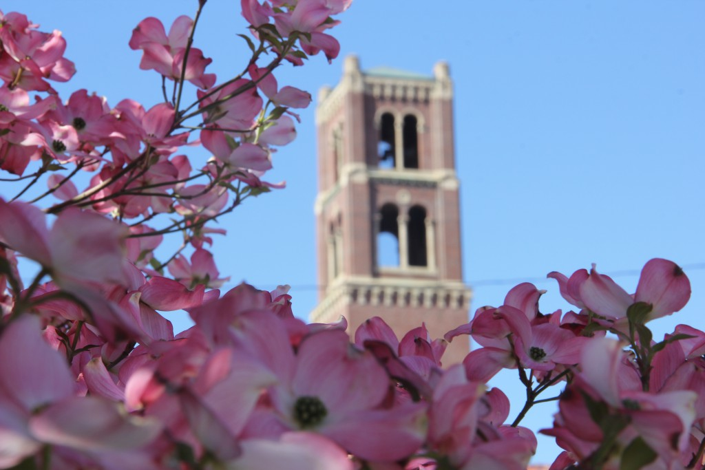 Beautiful flowering dogwoods frame the bell tower at the Grace of Christ Presbyterian Church of Yakima just off Yakima Avenue.
