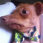 ugly-dog-funny-pictures