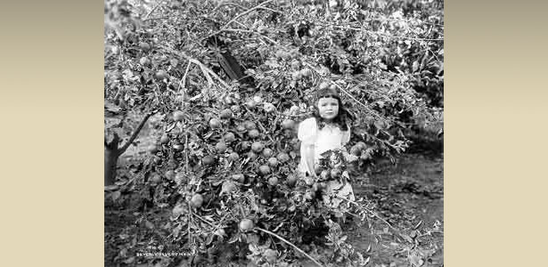 Girl in Orchard