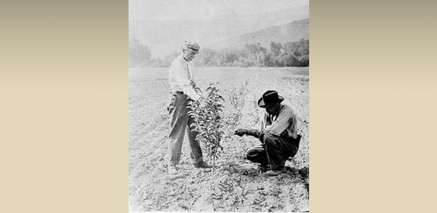 Historic Farming Photo